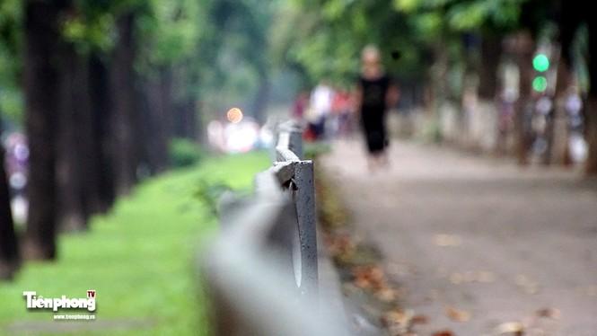 Hàng cây trên đường Kim Mã trước giờ chặt hạ, đánh chuyển - ảnh 9
