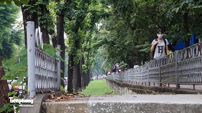 Hàng cây trên đường Kim Mã trước giờ chặt hạ, đánh chuyển - ảnh 10