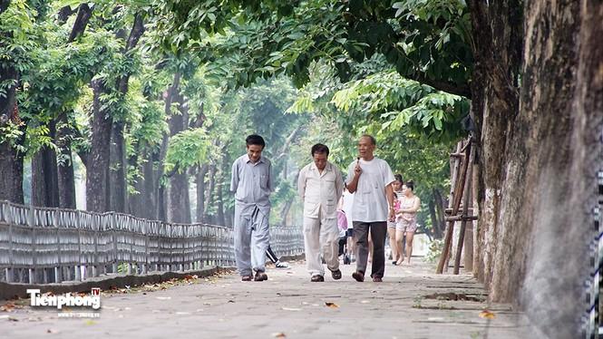 Hàng cây trên đường Kim Mã trước giờ chặt hạ, đánh chuyển - ảnh 13