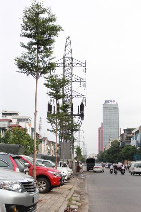 Thắc mắc với cách trồng cây dưới lưới điện cao áp - ảnh 2
