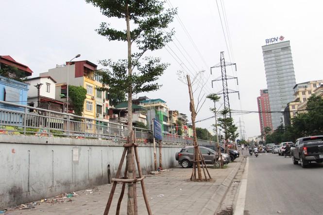 Thắc mắc với cách trồng cây dưới lưới điện cao áp - ảnh 1