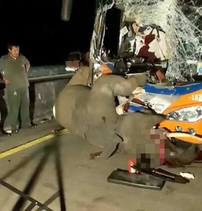 Đi bộ giữa đường, voi bị xe bus đâm chết thương tâm - ảnh 5