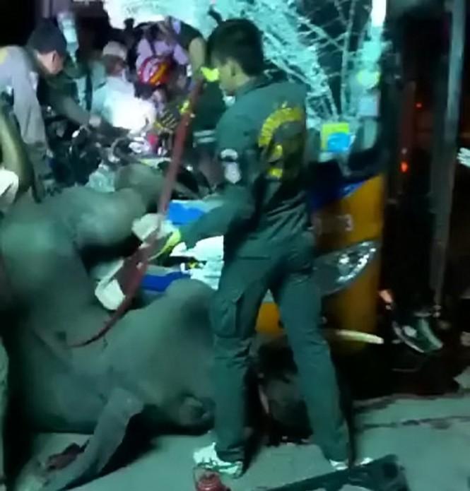 Đi bộ giữa đường, voi bị xe bus đâm chết thương tâm - ảnh 1