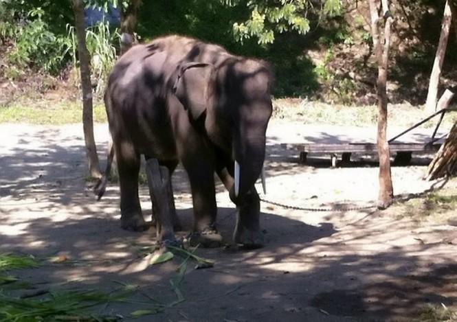 Đi bộ giữa đường, voi bị xe bus đâm chết thương tâm - ảnh 6