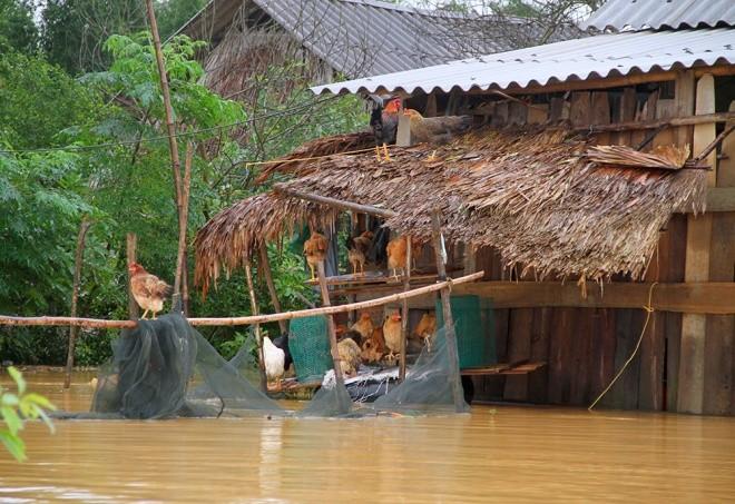 Nghìn người ở Hà Tĩnh chui mái nhà chờ nước rút - ảnh 5
