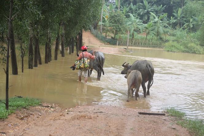Nước sông Lam dâng cao, người dân hoang mang chạy lũ - ảnh 1