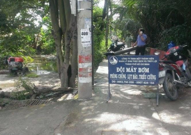 Triều cường gây ngập, người nuôi cá Sài Gòn khóc ròng - ảnh 2