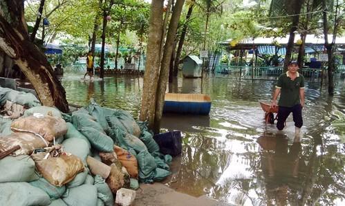 Triều cường gây ngập, người nuôi cá Sài Gòn khóc ròng - ảnh 3