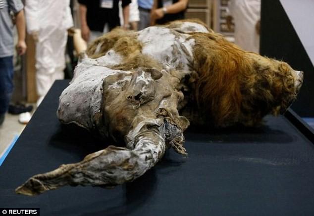 Tái sinh voi ma mút sau hàng ngàn năm tuyệt chủng - ảnh 1