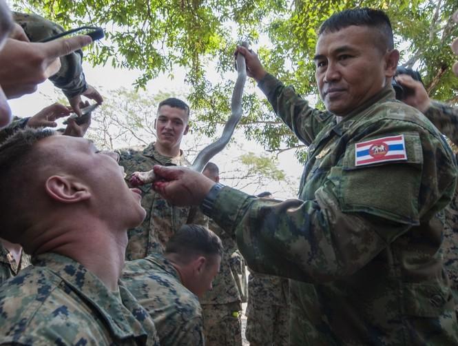Lính Mỹ uống máu rắn, ăn bọ cạp sống ở Thái Lan - ảnh 10