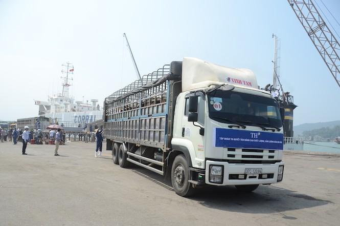 1.300 bò sữa nhập khẩu từ Mỹ của TH true Milk cập cảng - ảnh 2