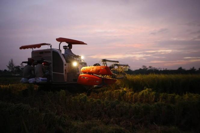 Người dân Nam Định dầm mưa gặt lúa chạy bão - ảnh 10