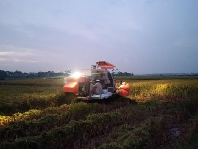 Người dân Nam Định dầm mưa gặt lúa chạy bão - ảnh 4