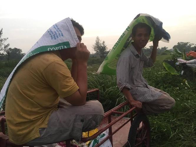 Người dân Nam Định dầm mưa gặt lúa chạy bão - ảnh 5