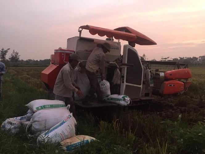Người dân Nam Định dầm mưa gặt lúa chạy bão - ảnh 8
