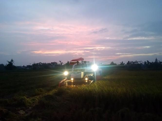 Người dân Nam Định dầm mưa gặt lúa chạy bão - ảnh 7