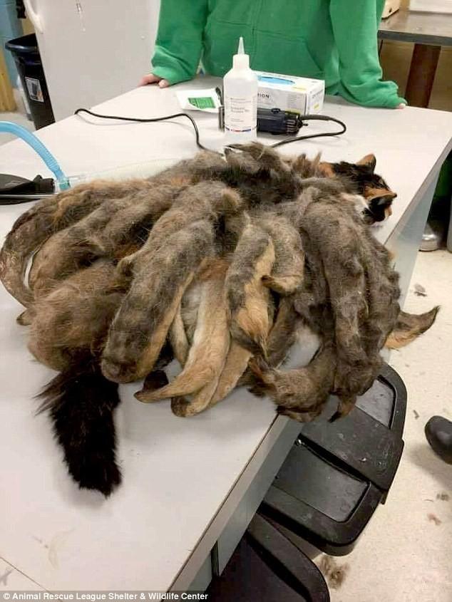 Mèo hóa 'bạch tuộc' vì bị bỏ rơi nhiều năm - ảnh 1