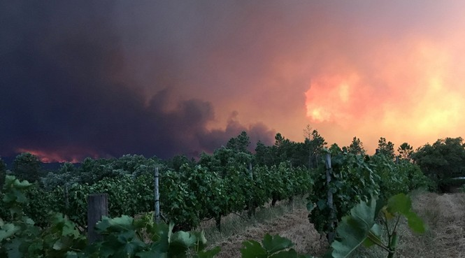 Thảm họa cháy rừng ở Bồ Đào Nha, 57 người thiệt mạng - ảnh 5