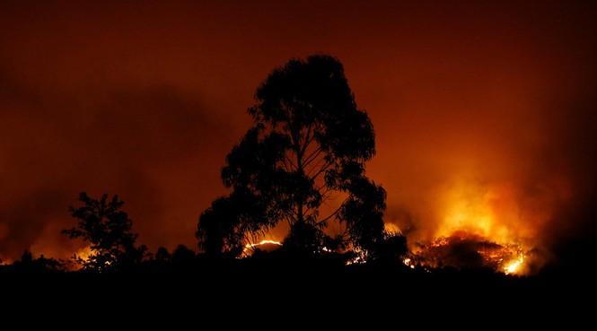 Thảm họa cháy rừng ở Bồ Đào Nha, 57 người thiệt mạng - ảnh 6