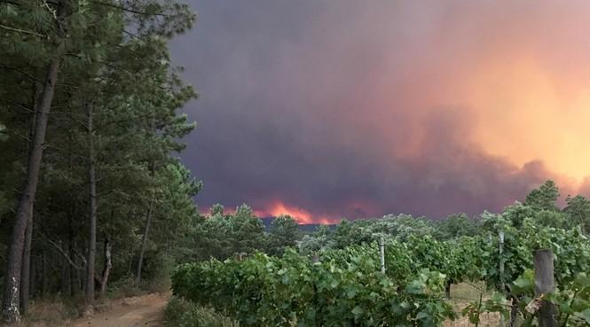 Thảm họa cháy rừng ở Bồ Đào Nha, 57 người thiệt mạng - ảnh 7
