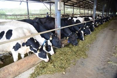 Vinamilk đẩy mạnh mua sữa tươi nguyên liệu của nông dân - ảnh 2
