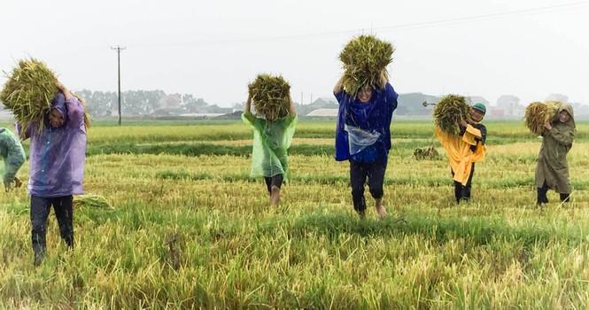 Áo xanh tình nguyện giúp dân chống bão số 10 - ảnh 3