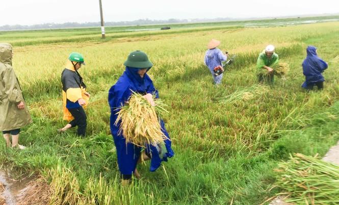 Áo xanh tình nguyện giúp dân chống bão số 10 - ảnh 2