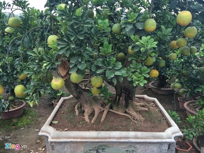 Những loại cây, quả được giới nhà giàu săn lùng chơi Tết  - ảnh 7
