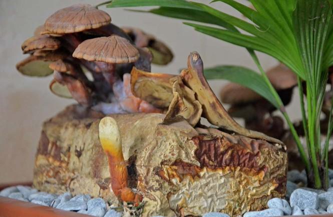 [ẢNH] Cận cảnh linh chi bonsai bạc triệu hút khách chơi Tết - ảnh 7