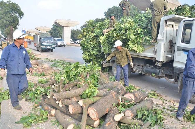 Nuối tiếc nhìn xà cừ bị chặt hạ trên đường Nguyễn Trãi - ảnh 10