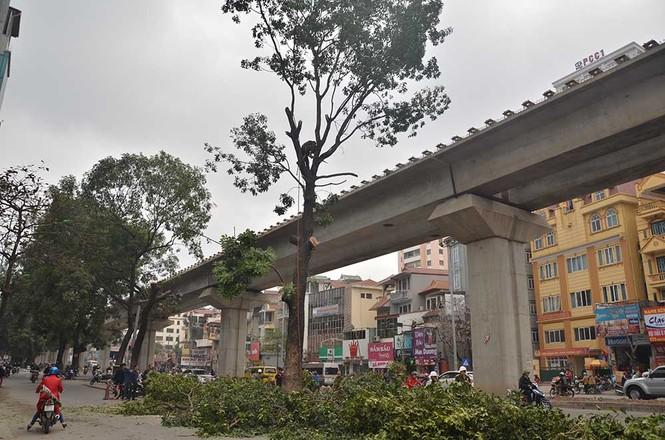 Nuối tiếc nhìn xà cừ bị chặt hạ trên đường Nguyễn Trãi - ảnh 8