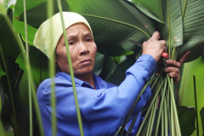 'Đột nhập' làng lá dong lớn nhất Hà thành vào giáp Tết - ảnh 6
