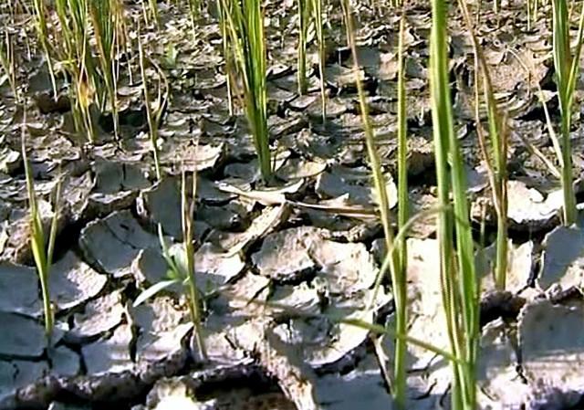 Gia Lai: Hơn 61.000 người thiếu đói vì hạn - ảnh 12