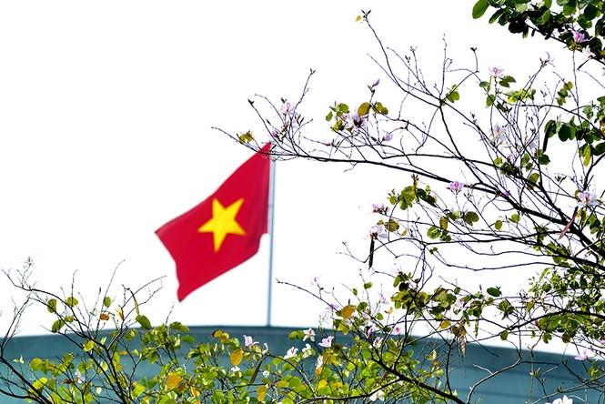 Hoa ban Tây Bắc đẹp nao lòng giữa Thủ đô - ảnh 14