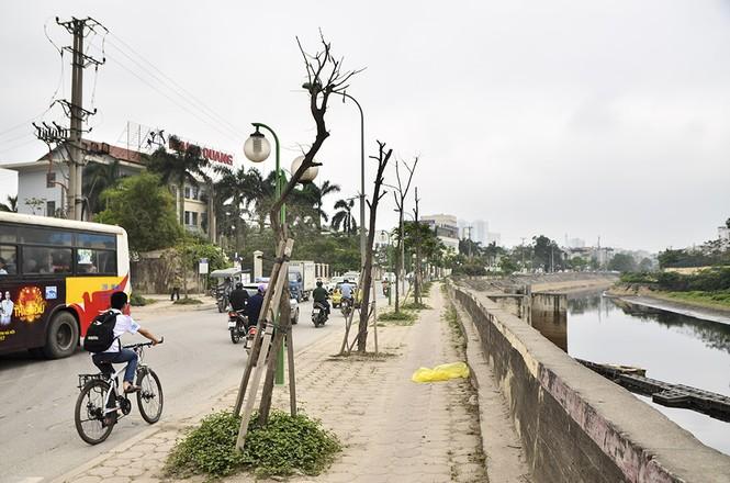 Hà Nội có thêm tuyến đường cây xanh chết khô, trơ trụi lá - ảnh 7