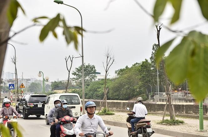 Hà Nội có thêm tuyến đường cây xanh chết khô, trơ trụi lá - ảnh 16