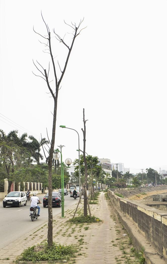 Hà Nội có thêm tuyến đường cây xanh chết khô, trơ trụi lá - ảnh 10