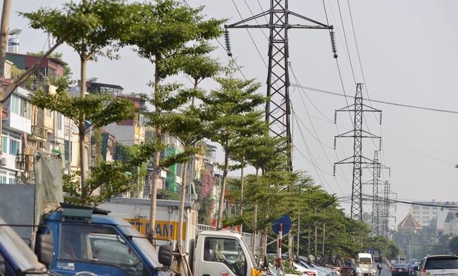 Cận cảnh hàng cây xanh trồng dưới lưới điện 110 KV - ảnh 1