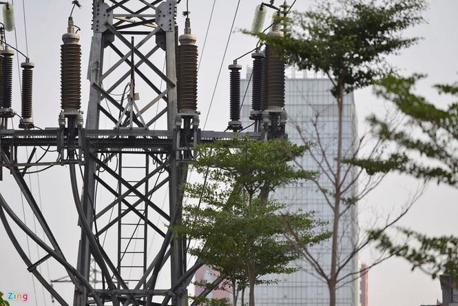 Cận cảnh hàng cây xanh trồng dưới lưới điện 110 KV - ảnh 2