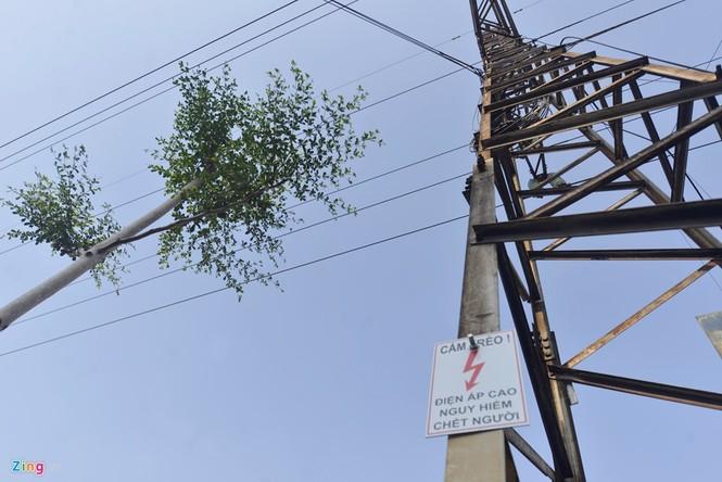 Cận cảnh hàng cây xanh trồng dưới lưới điện 110 KV - ảnh 3