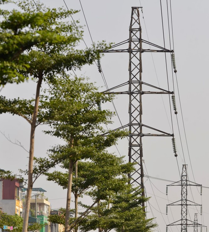Cận cảnh hàng cây xanh trồng dưới lưới điện 110 KV - ảnh 4