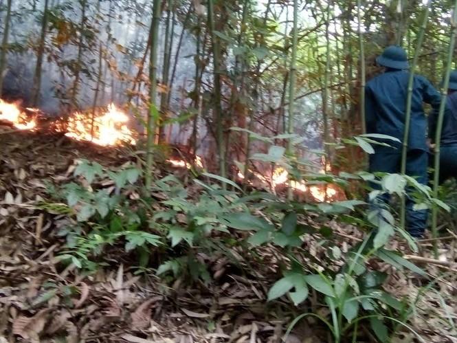 Chiến sĩ phòng không chữa cháy rừng - ảnh 1