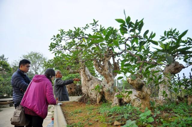 Vườn cảnh tiền tỷ của lão nông chơi cây nổi tiếng Hà thành - ảnh 11