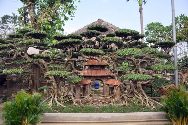 Vườn cảnh tiền tỷ của lão nông chơi cây nổi tiếng Hà thành - ảnh 13