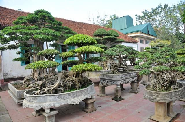 Vườn cảnh tiền tỷ của lão nông chơi cây nổi tiếng Hà thành - ảnh 14