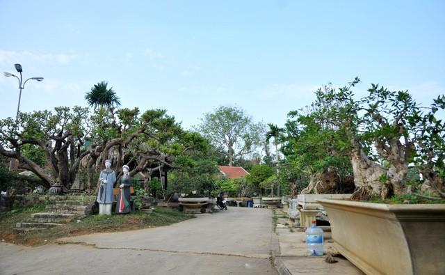 Vườn cảnh tiền tỷ của lão nông chơi cây nổi tiếng Hà thành - ảnh 2