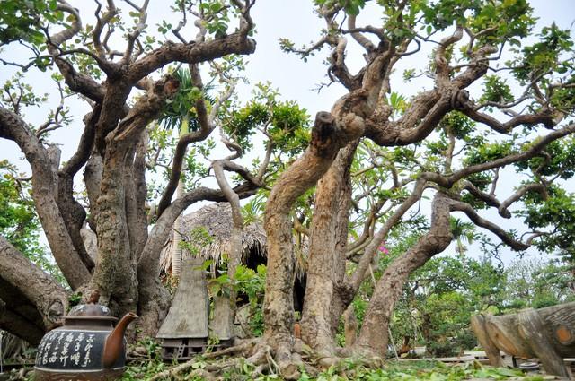 Vườn cảnh tiền tỷ của lão nông chơi cây nổi tiếng Hà thành - ảnh 3