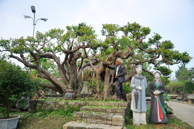 Vườn cảnh tiền tỷ của lão nông chơi cây nổi tiếng Hà thành - ảnh 4