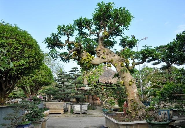 Vườn cảnh tiền tỷ của lão nông chơi cây nổi tiếng Hà thành - ảnh 5