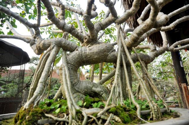 Vườn cảnh tiền tỷ của lão nông chơi cây nổi tiếng Hà thành - ảnh 8